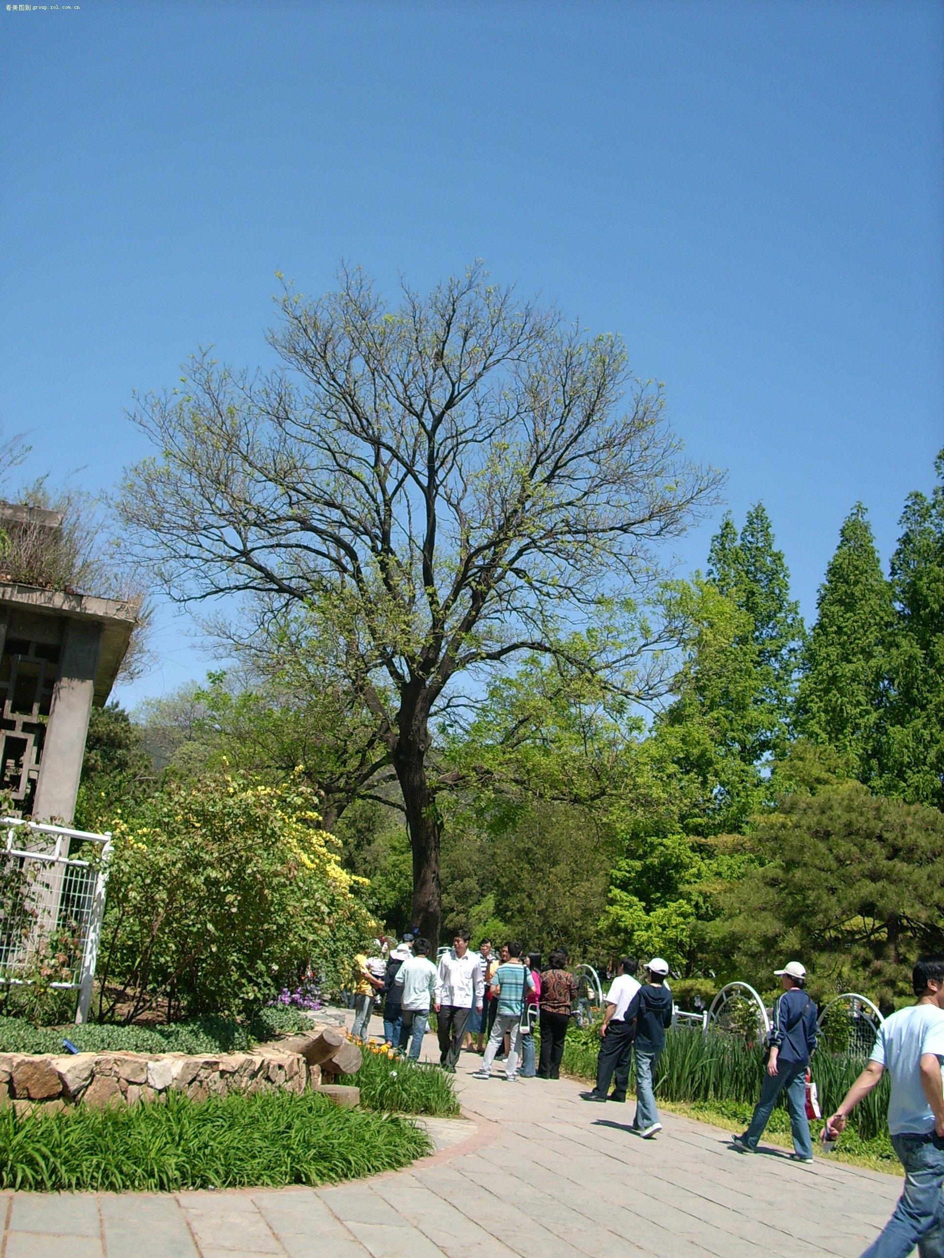 五一北京植物园风景摄影