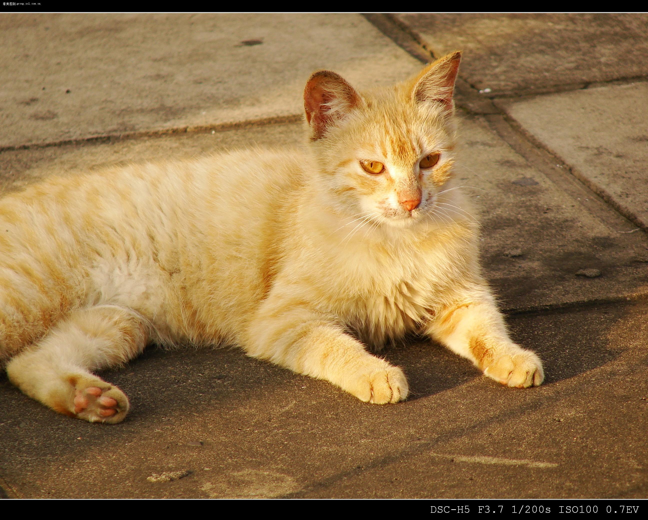小猫照片可爱男