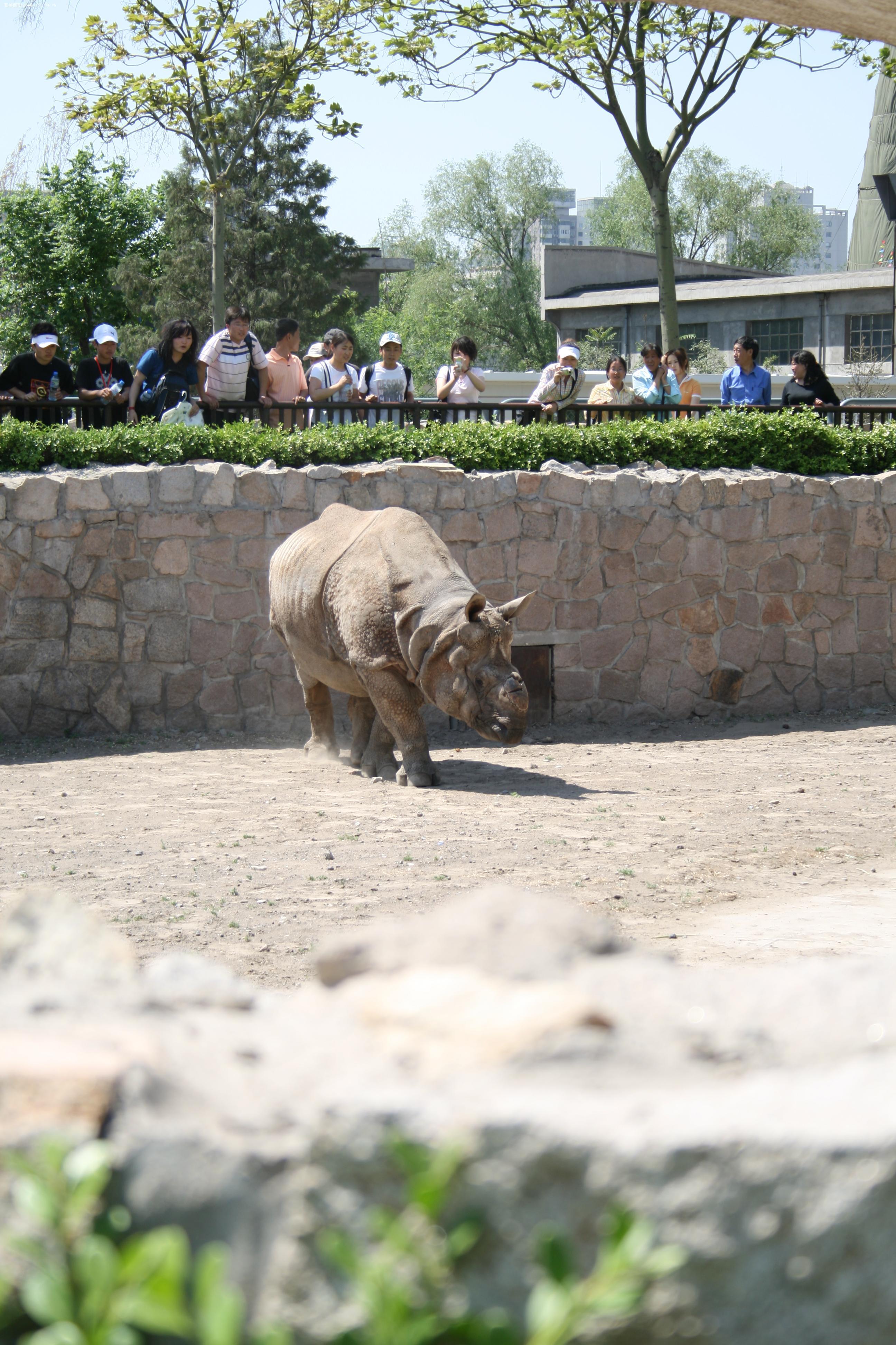 3日 游北京动物园!(人多的可怕)
