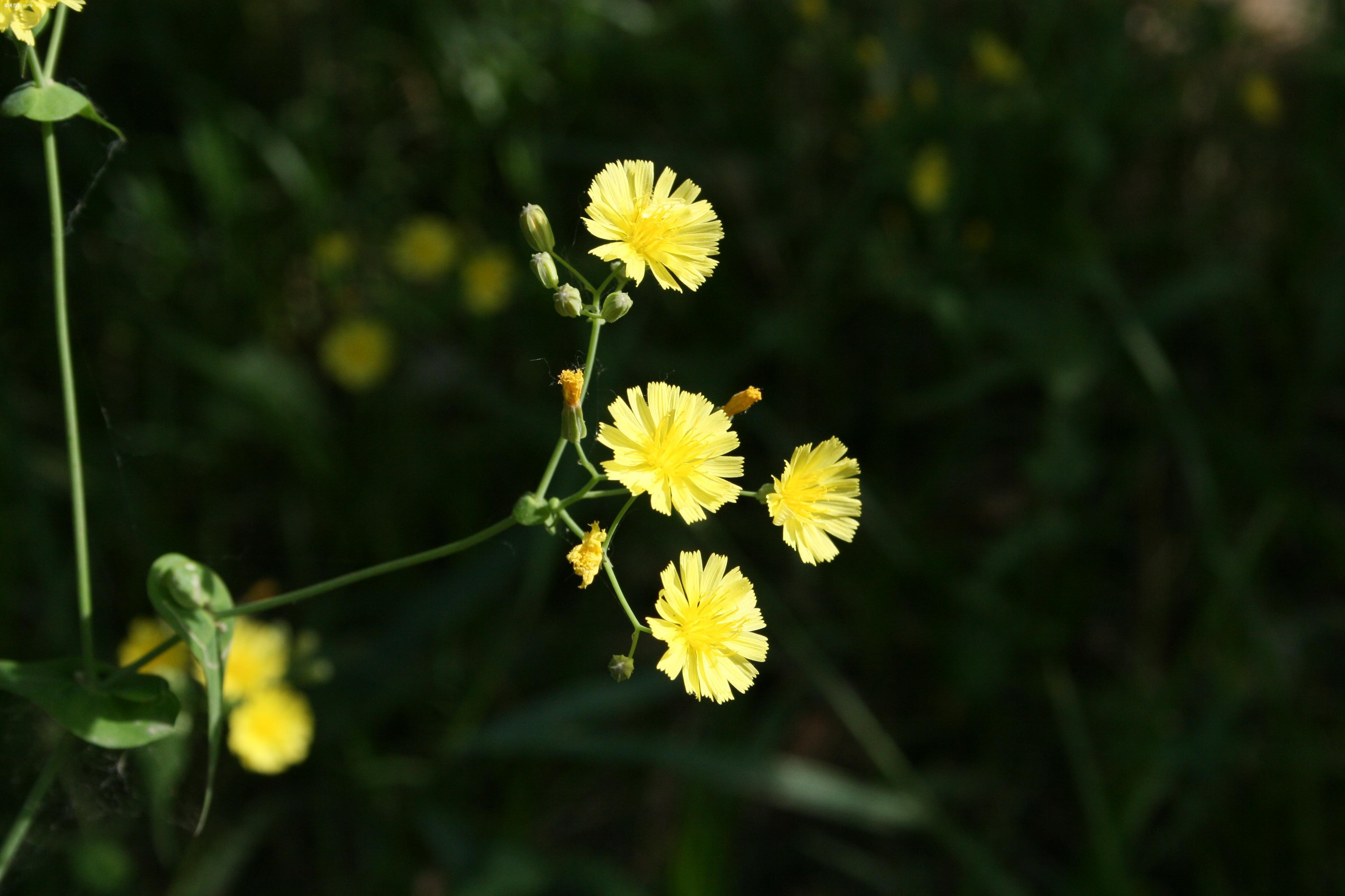 【很有立体感的花卉照片