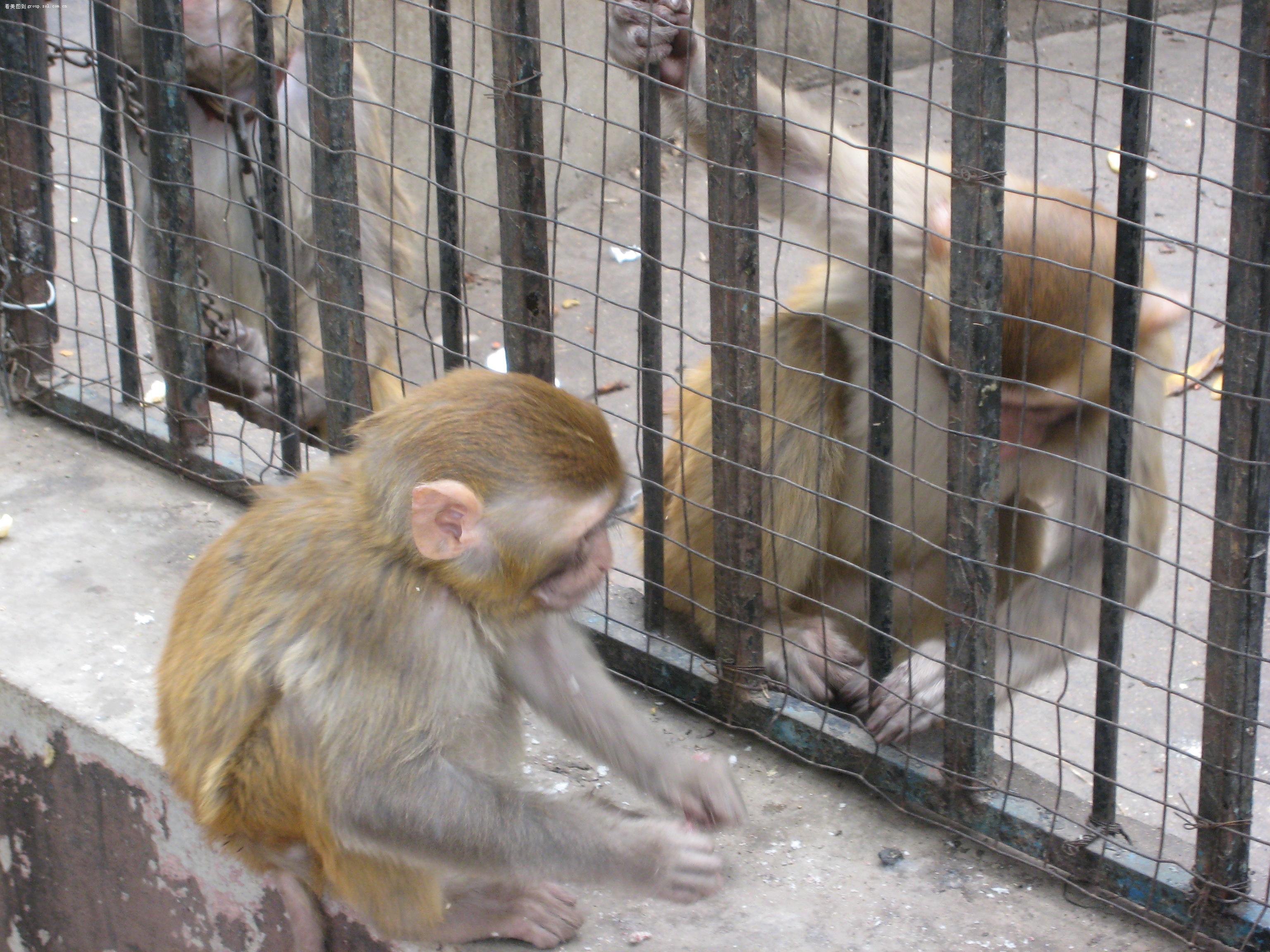 多可爱的小猴子呀!