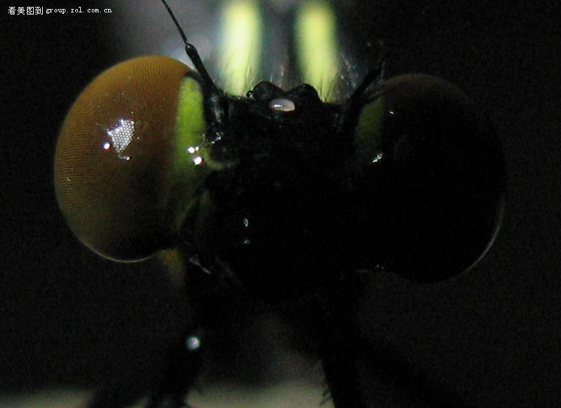 蜻蜓的眼睛