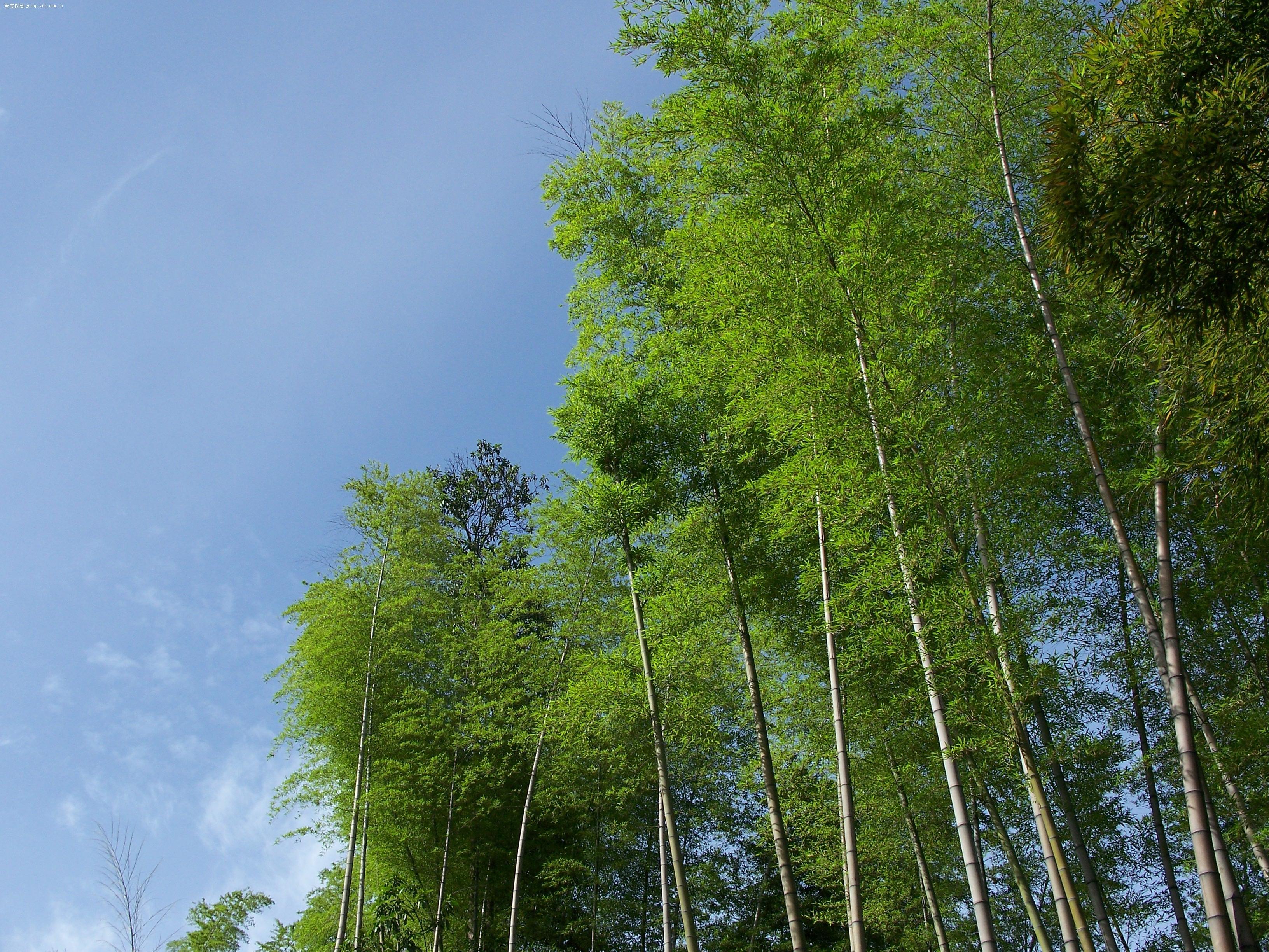 绿色竹海风景区