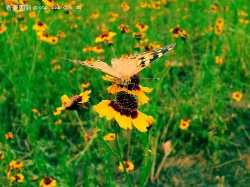 花丛中 蜜蜂和蝴蝶