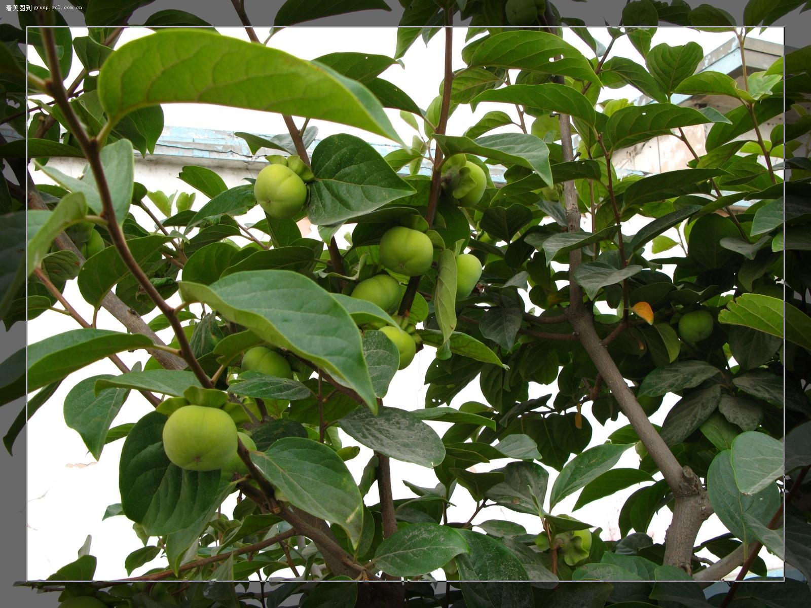 壁纸 果树 花 树 植物 桌面 1600_1200