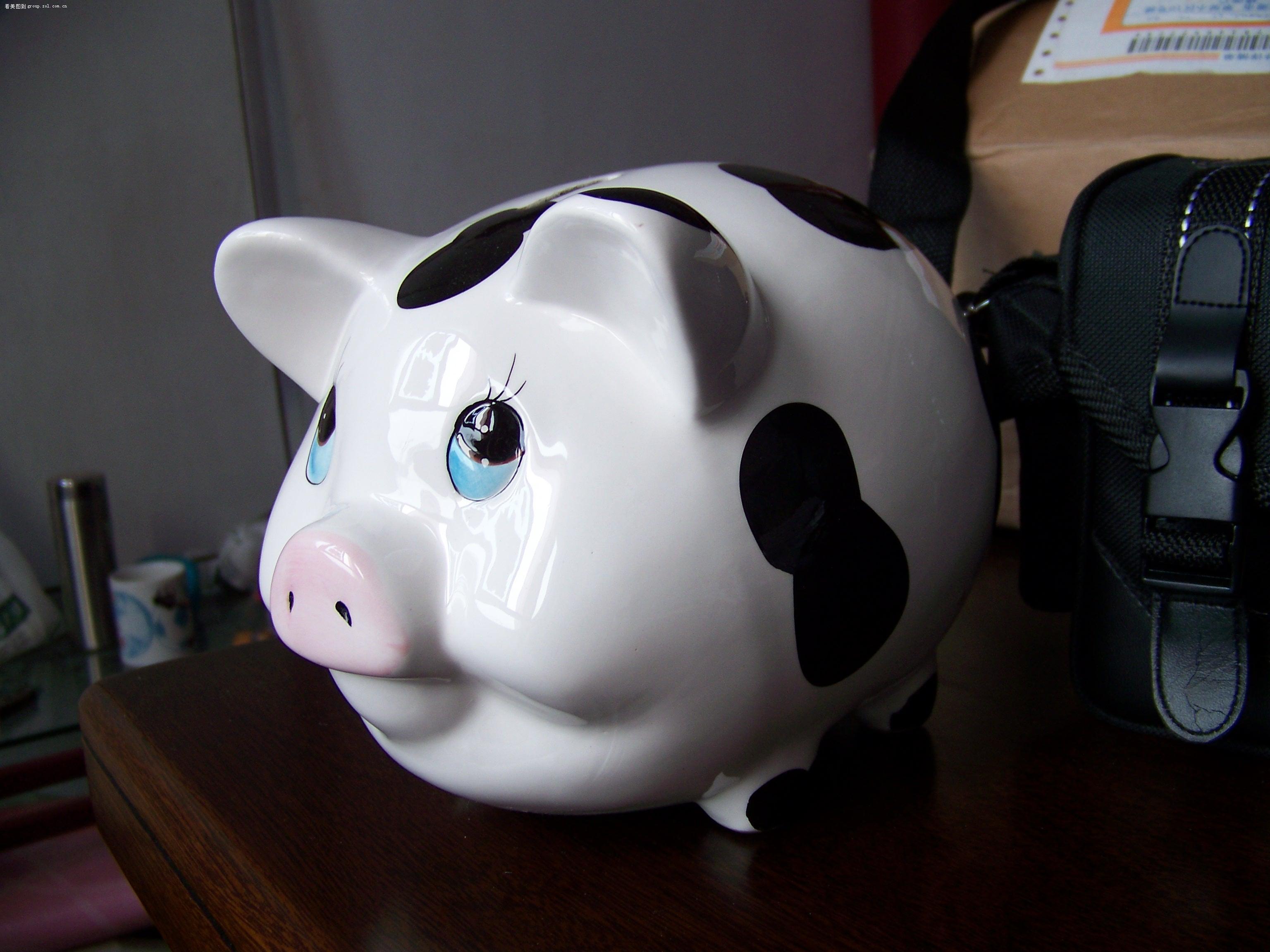 可爱的小猪猪,大家猜下它有多重?