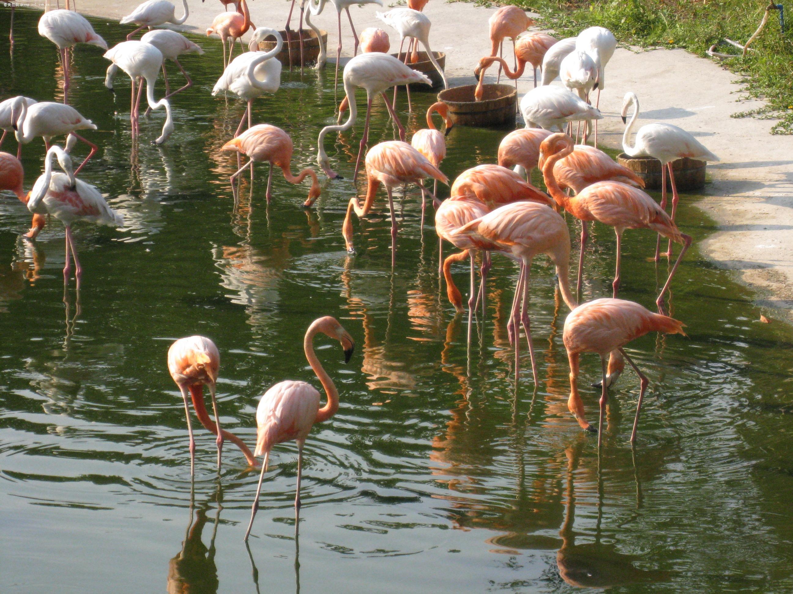 【和我一起游广州野生动物世界