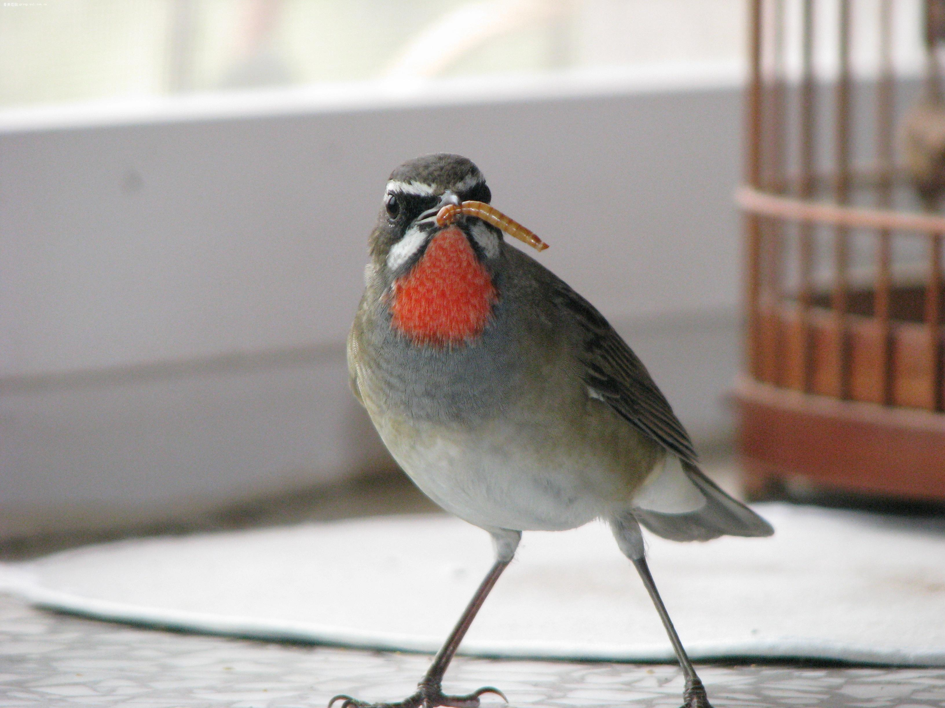 【小鸡吃虫~~】-动物植物-数码摄影论坛-zol中关村