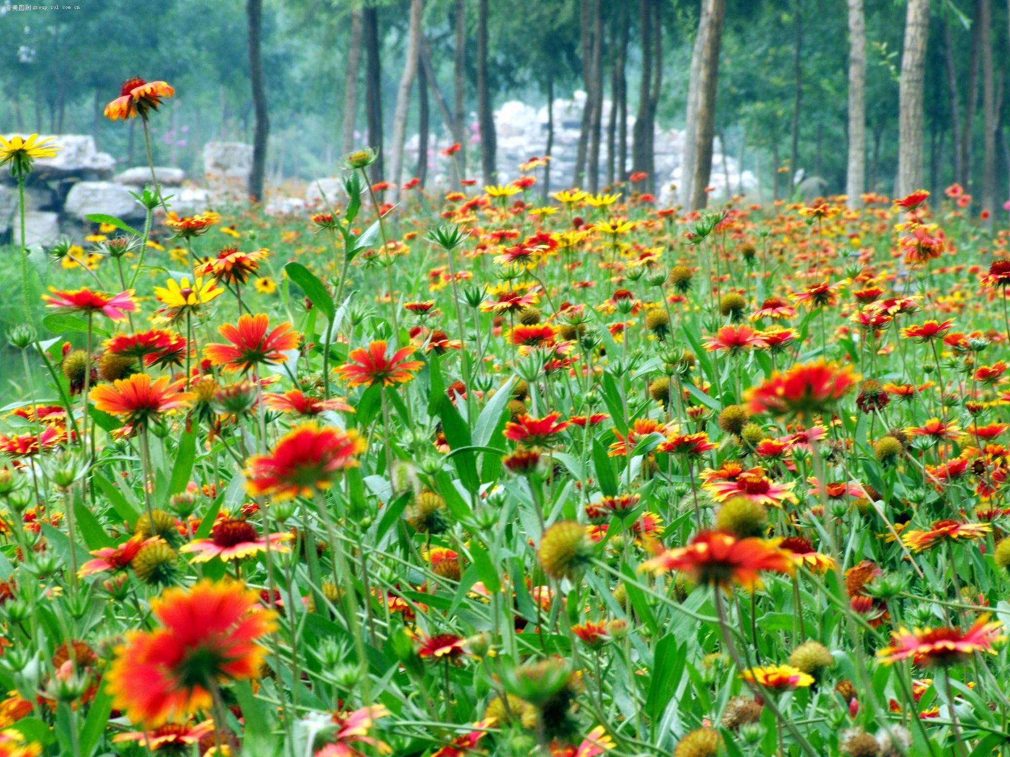 野花树林风景图