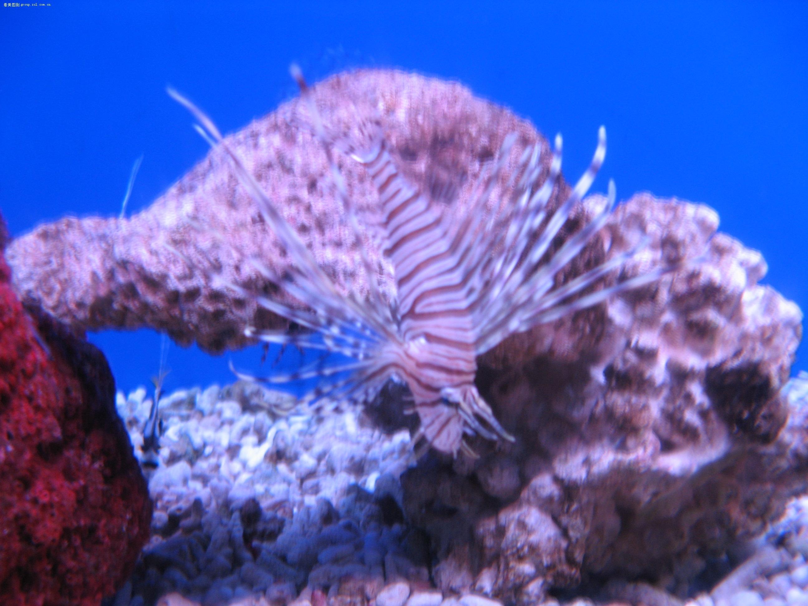 海底世界,这些是什么鱼呀?