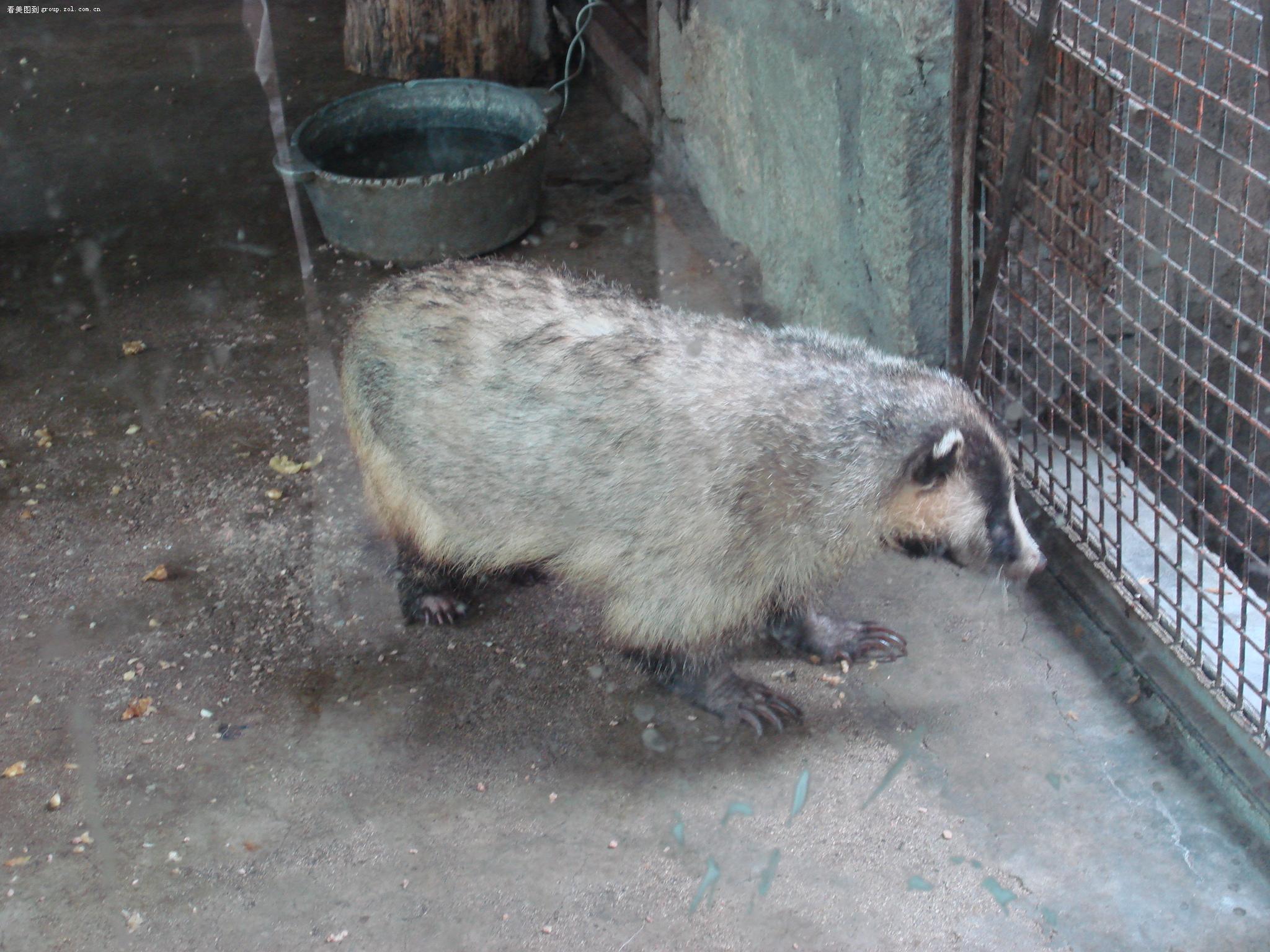 【北京动物园~~ 大家来看动物吧】