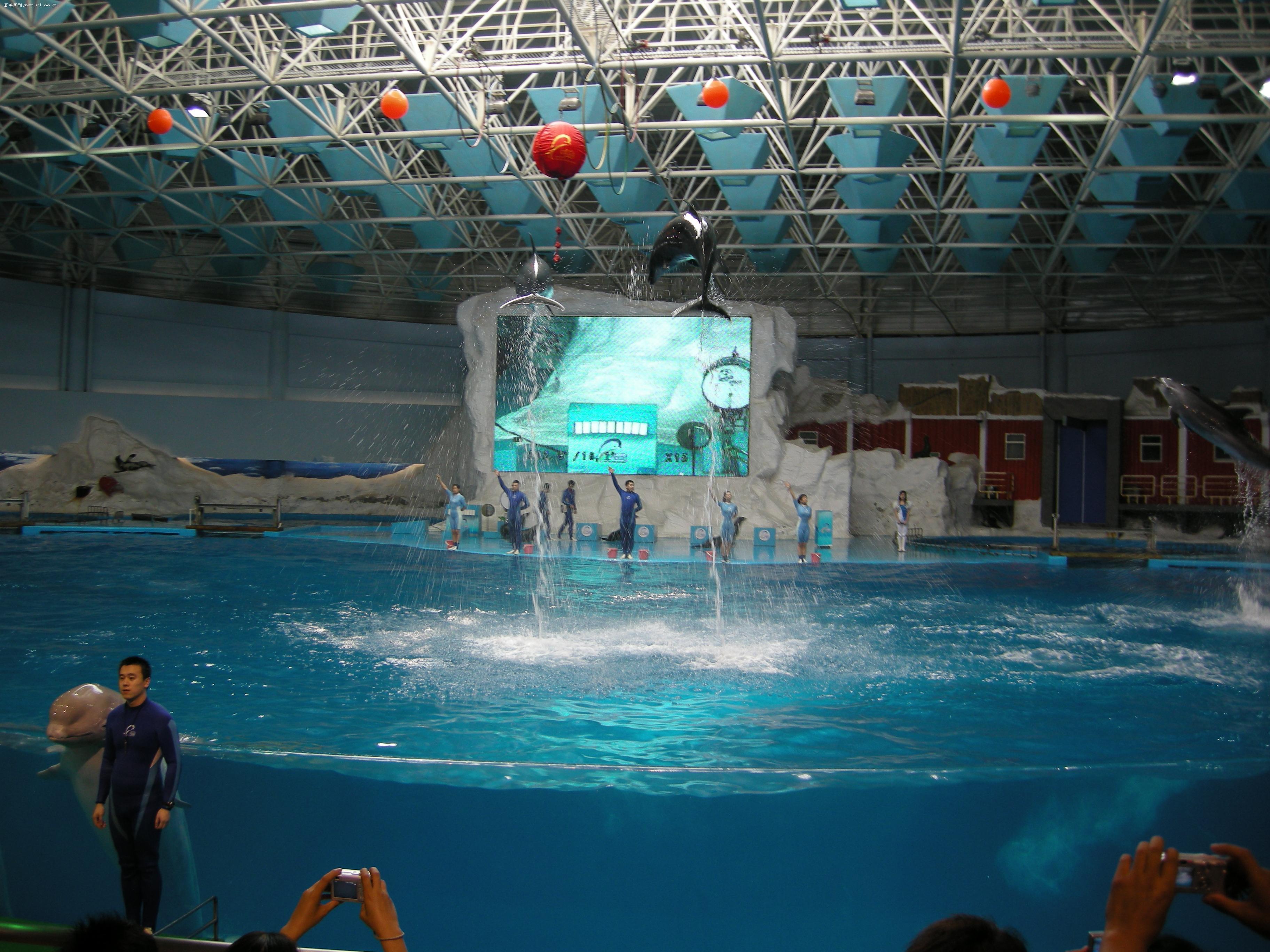 青岛极地海洋馆的海豚表演