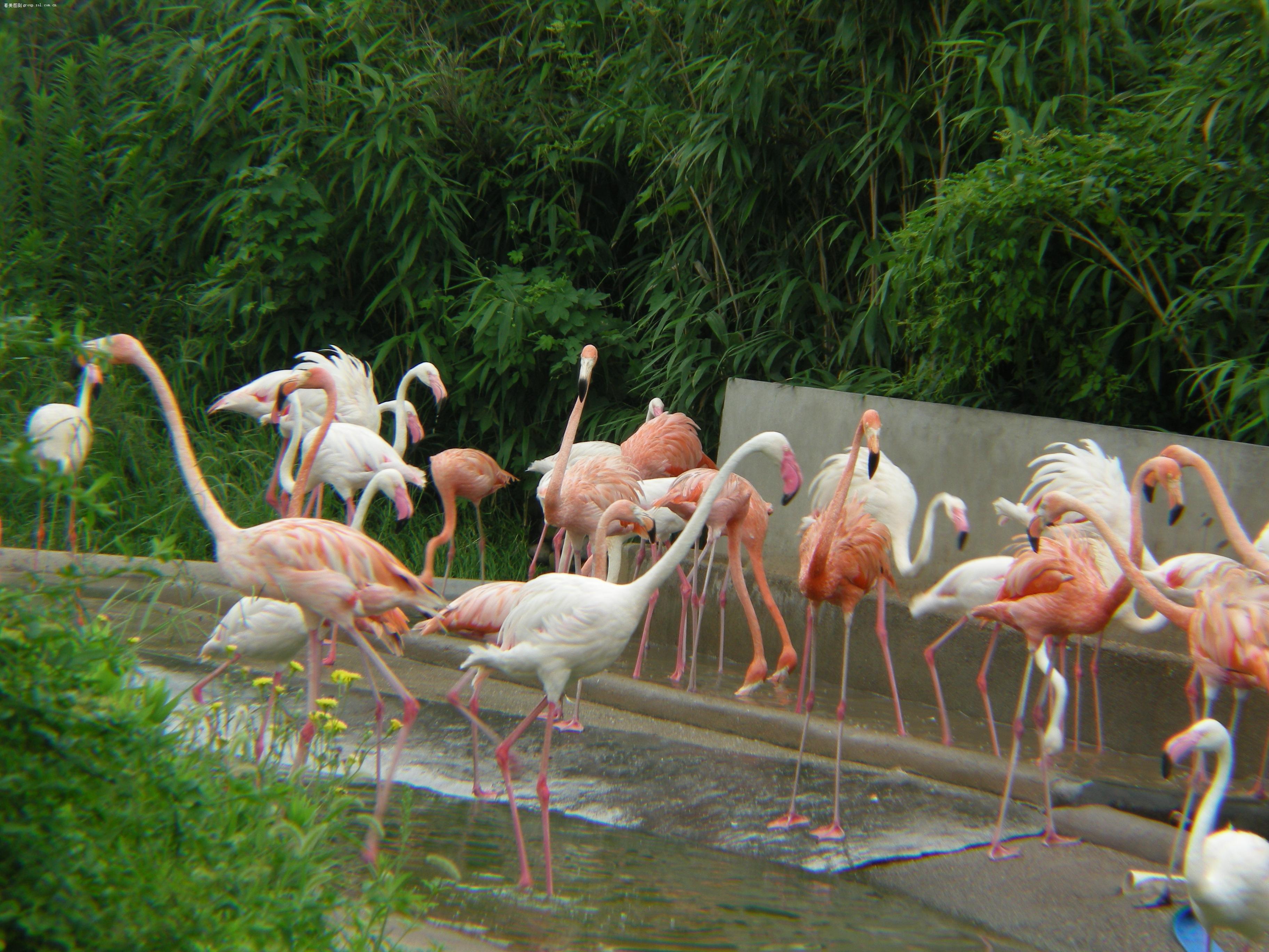【去上海野生动物园游记】尼康