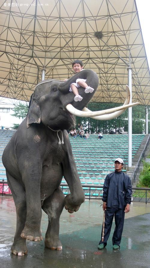 8月大连游记-4-【森林动物园·大象表演】