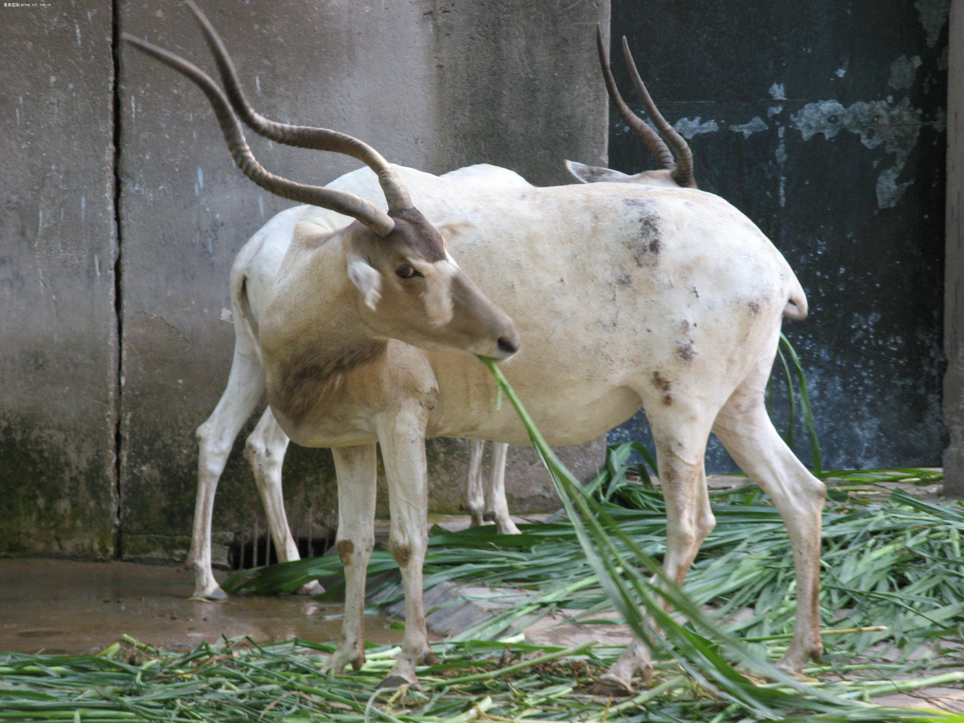 【广州动物园】- 论坛-zol中关村在线