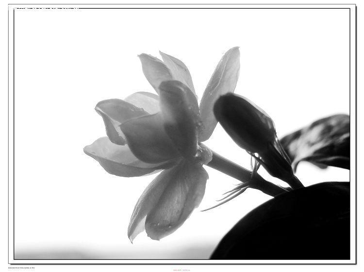 莲花铅笔画步骤图解