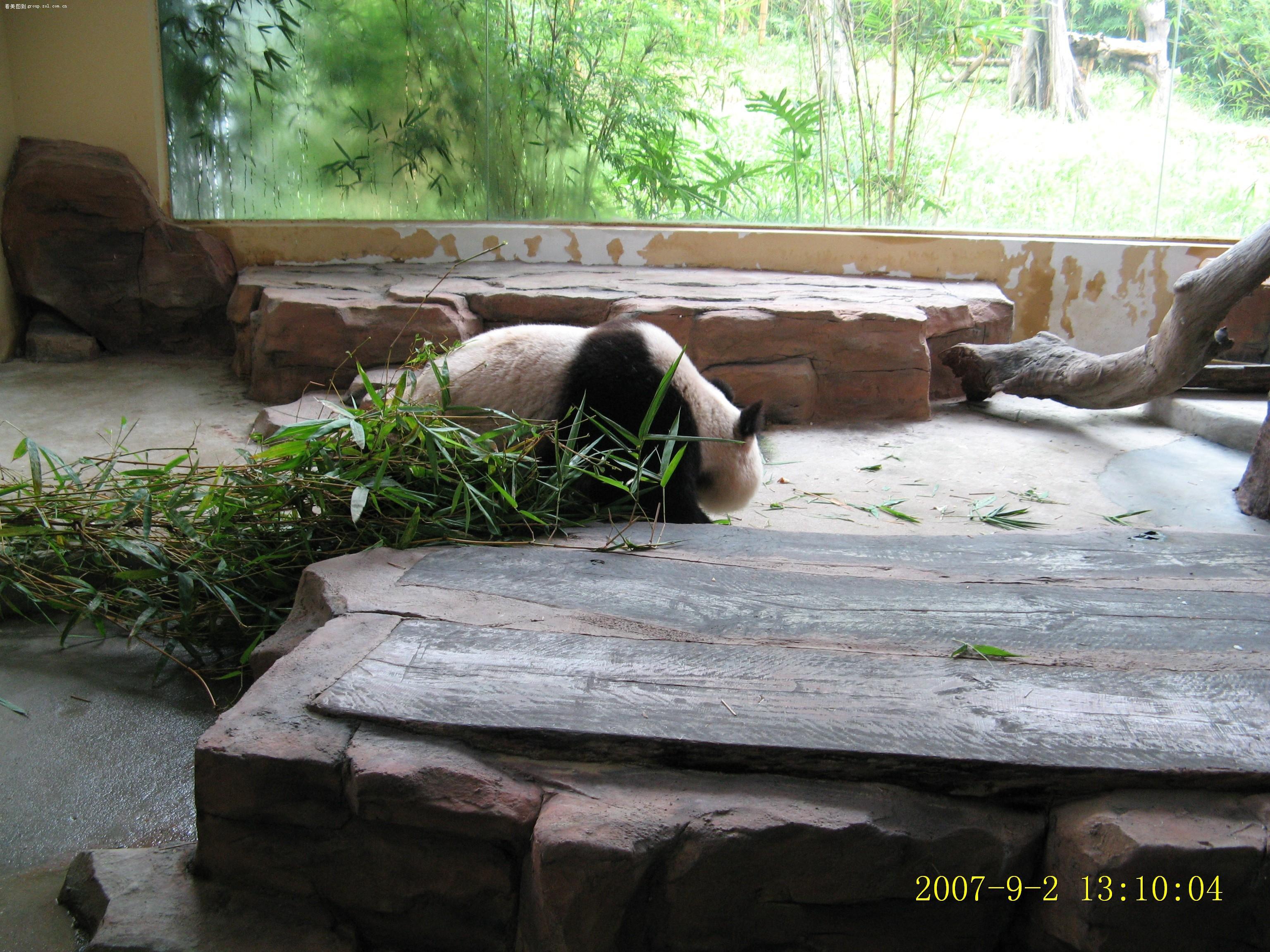 【广州香江野生动物园