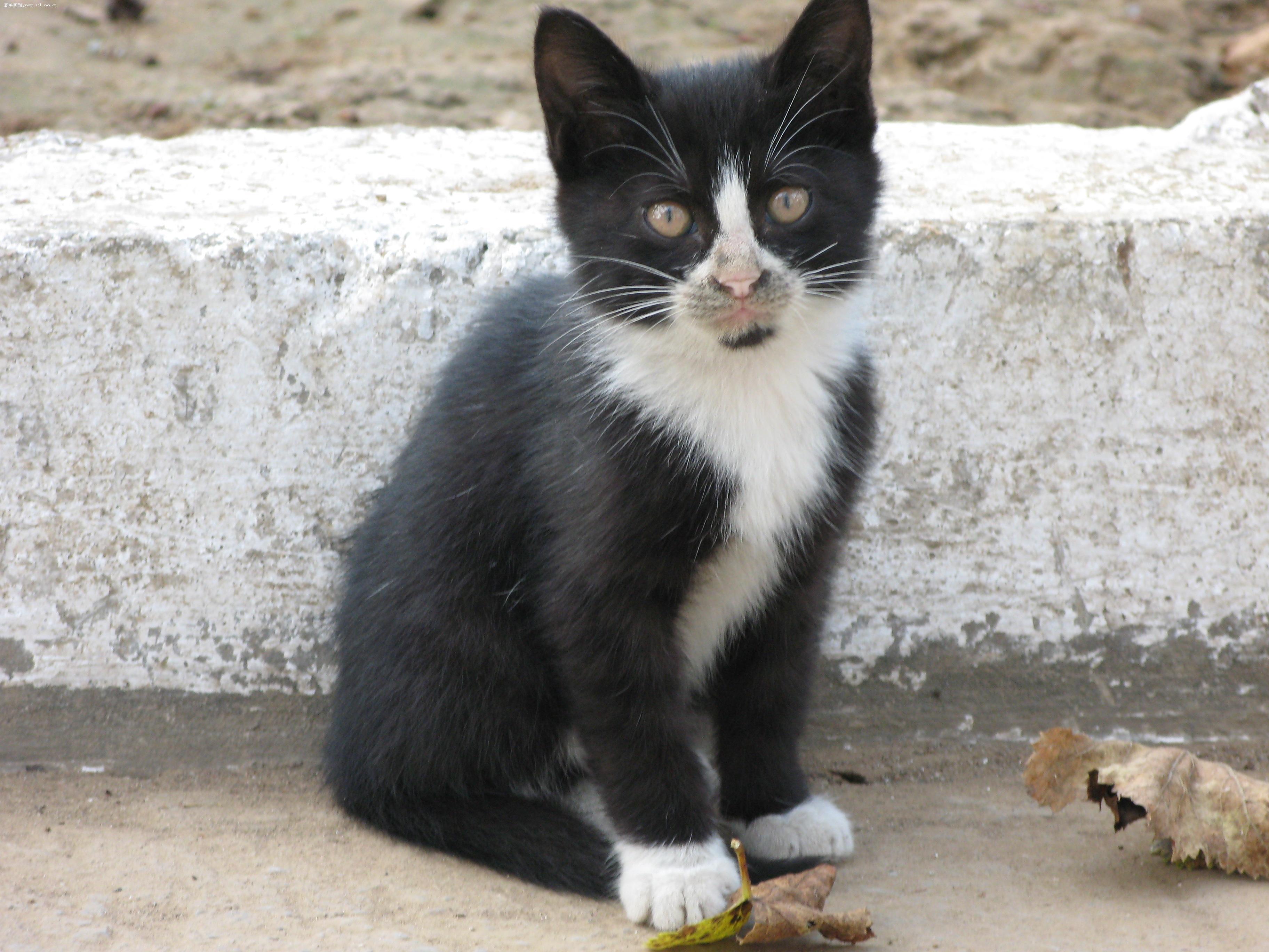 淘气的小花猫