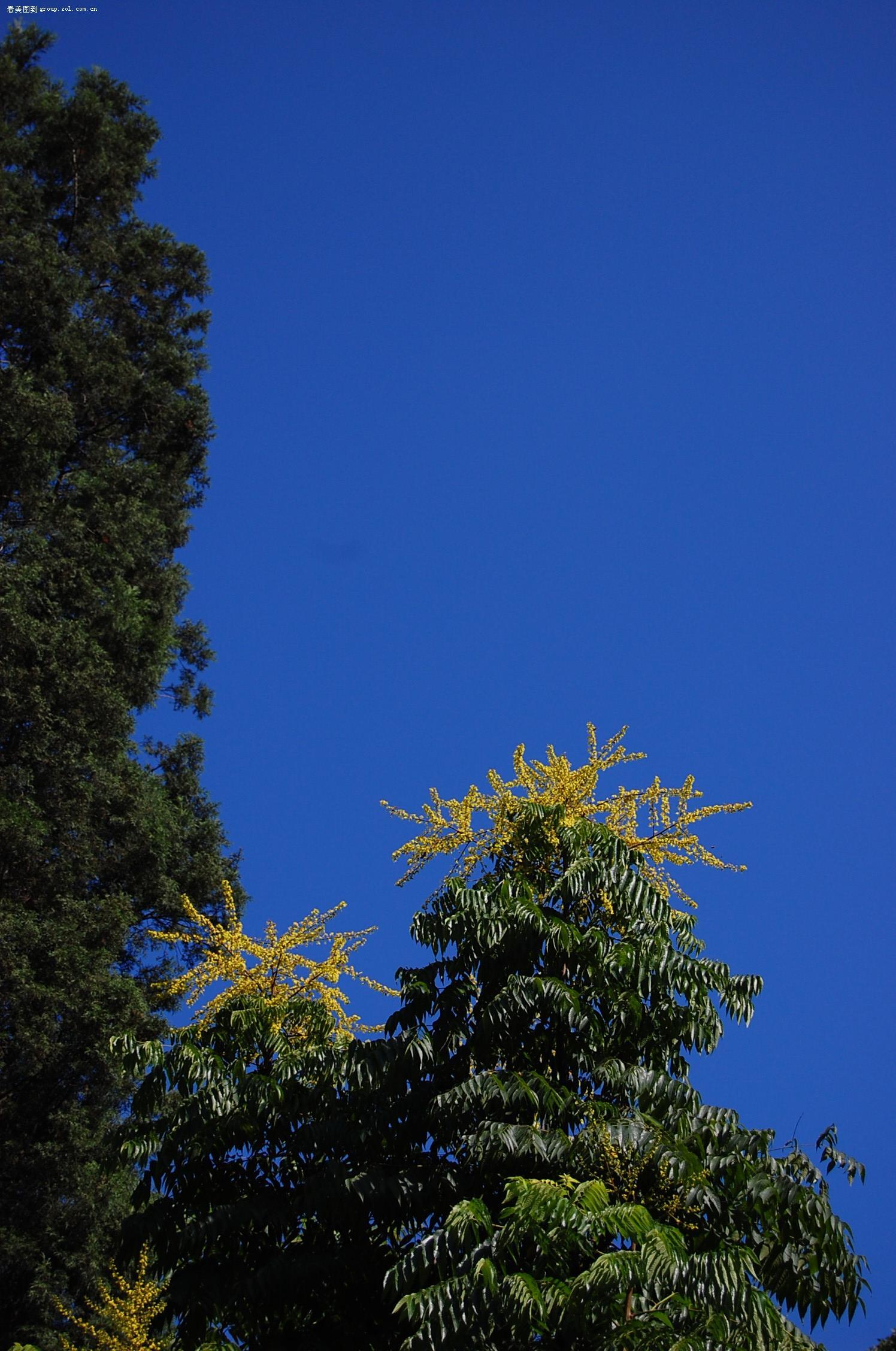 晴天试机+uv(未ps,未压缩原片!蓝天,白云,绿树,黄花.